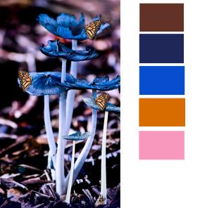 colors 63